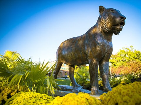 Bronze tiger statue surrounded by gold mums and fall foliage