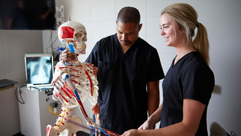 Radiography students looking at scan with skeleton model